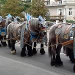 Wiesn Pferdewagen