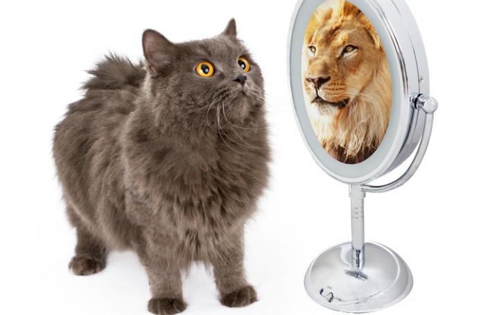 Die 6 Säulen des Selbstwertgefühls