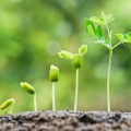 Leading Simple - Erlebnis und Ergebnis